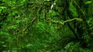 HD:Rain forest.(Panning shot)