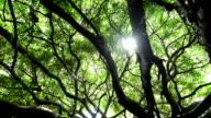 HD: sonnigen grünen Bäumen.