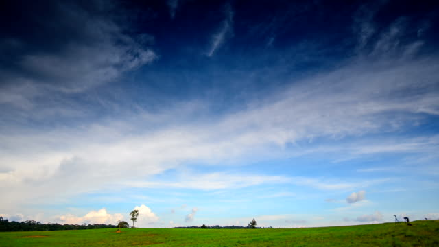 HD:Timelapse of green grass and blue sky cloudy