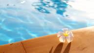 HD: tropische frangipani Blume auf den pool.