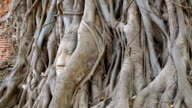 Head of Buddha at Wat Mahathat temple, Ayutthaya, Thailand