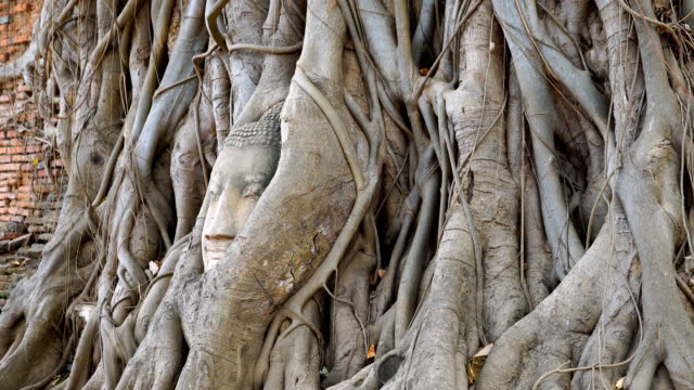 Head of Buddha at Wat Mahathat temple, Ayutthaya, Thailand