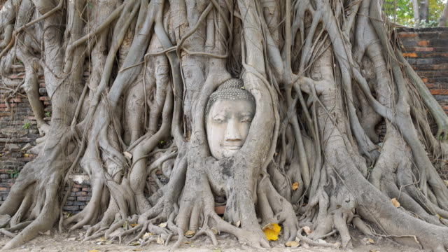 ZI Head of Buddha at Wat Mahathat temple, Ayutthaya, Thailand
