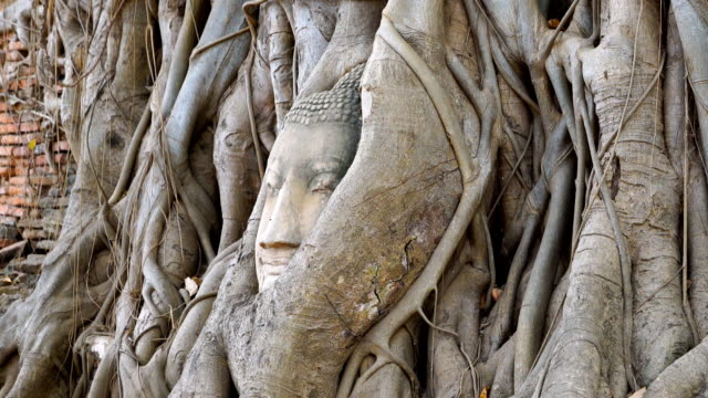 ZO Head of Buddha at Wat Mahathat temple, Ayutthaya, Thailand