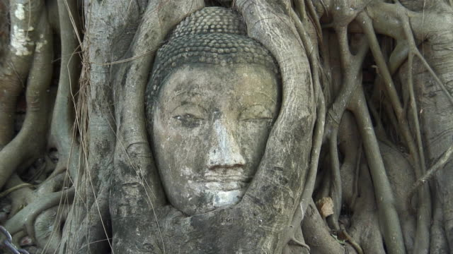 CU ZO MS Head of Buddha statue overgrown with tree roots at Wat Phra Mahathat / Ayutthaya, Thailand