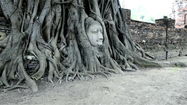 Head of Sandstone Buddha in root