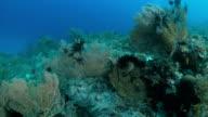 Healthy coral reef, Raja Ampat