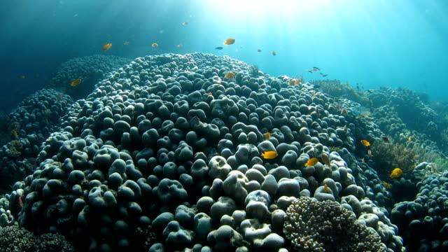 Healthy coral reef undersea