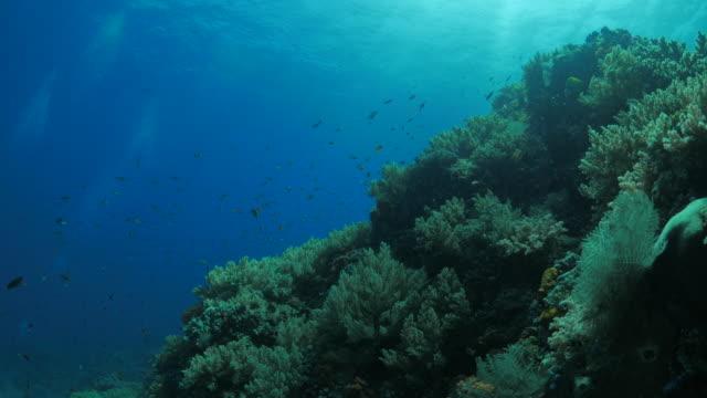 Healthy pinnacle Coral Reef undersea