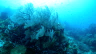 Healthy sea fan coral undersea