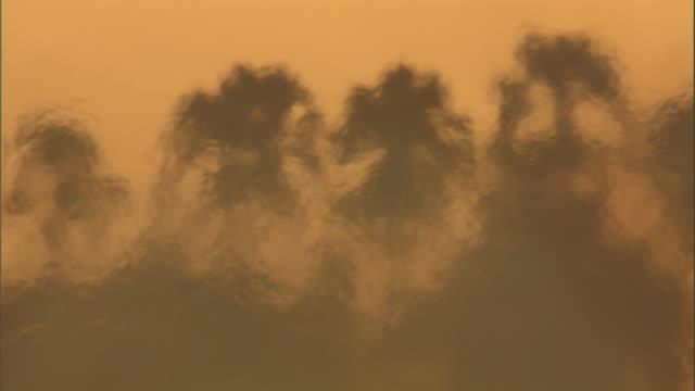 Heat waves ripple past burning palm trees on the Okavango Delta. Available in HD.