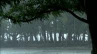 Heavy rain falls in Sundarbans Available in HD.