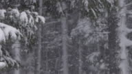 Heavy snow falling in a forest