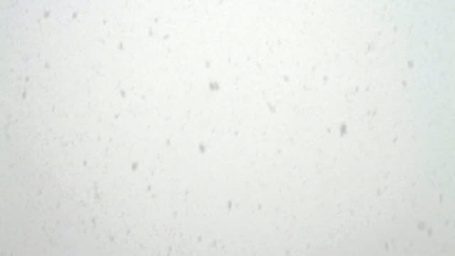 A heavy snowfall consists of countless big snowflakes.