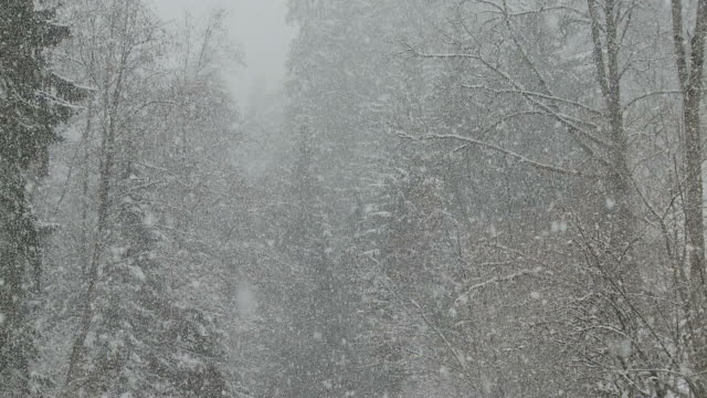 heavy snowfall over forest stream
