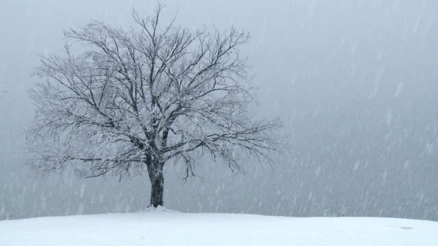 HD: Heavy snowing