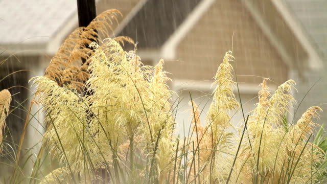 Heavy Storm Rainfall With Audio