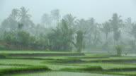 Schwere tropischen Regen Sturm über Reisfeld in Asien