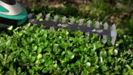 SLOW MOTION: Hedge Trimming