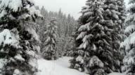 Heli Shot Through Winter Forest