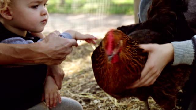 Hen und baby