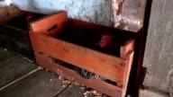 Hühner In Yard