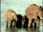 MS, COMPOSITE, Herd of African Elephant (Loxodonta africana) at waterhole, Tsavo National Park, Kenya