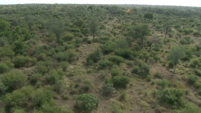 MS AERIAL  SLO MO TD Herd of elephants in bushes / Mpumalanga, South Africa