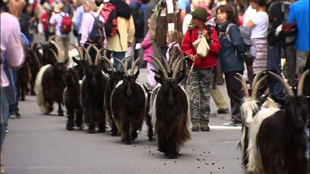 A herd of goats passes crowds of tourists in Zermatt, Switzerland.