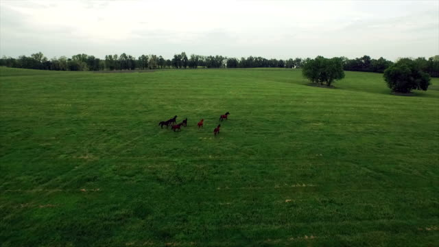 AERIAL: A herd of horses running free