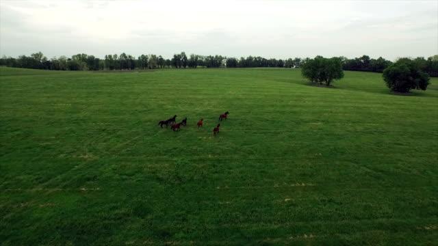 Antenne: Eine Herde Pferde laufen frei