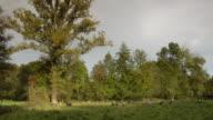 WS, Herd of sheep grazing on meadow, Krefeld, Germany