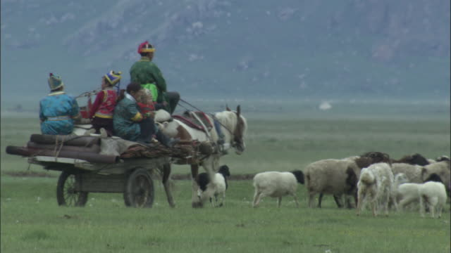 Herd of sheep walk past followed by family on wagon carrying collapsed ger, Bayanbulak grasslands.