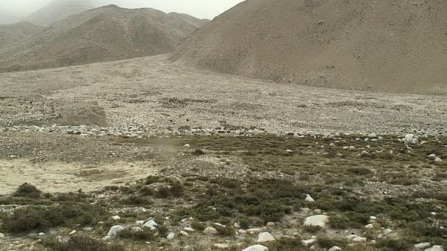 WS ZI Herd of wild cattle in landscape, Mt Everest Base Camp, Tibet