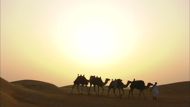 A herder leads a string of camels across the Saudi Arabian sands.