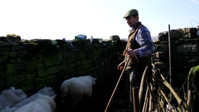 Herding Sheep into a Pen