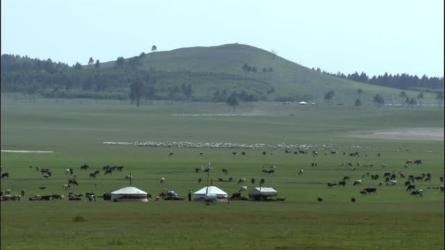 Herds of horses, cows and sheep near gers on steppe, Inner Mongolia, China