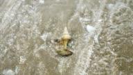 Hermit crabs fighting slider shot.