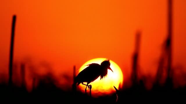 Heron on sunrise