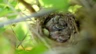 Versteckte Nest