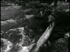 B/W high angle boy walking on log in woods over rushing stream / Oregon