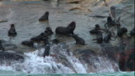 High Angle hand-held - Waves wash over rocks where a pod of seals congregates.