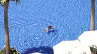 High angle shot of a woman swimming in an open air swimming pool.