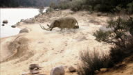 High Angle static - A woolly mammoth falls on a riverbank and clan members run forward. /