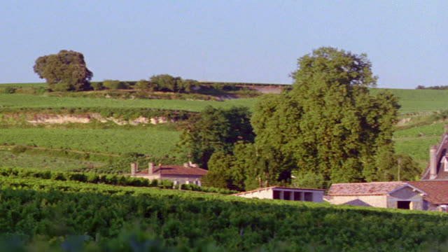 high angle PAN tilt up tilt down vineyard with house in middle of field / Bordeaux, France