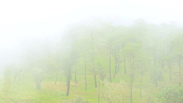 hoge hoekmening: Mist overgang bergen