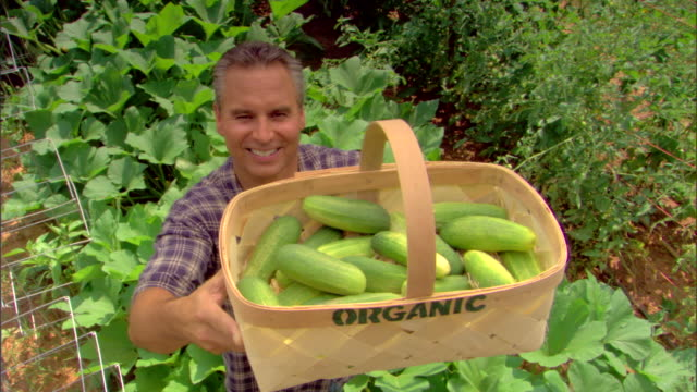 High angle view of man holding basket of organic cucumbers