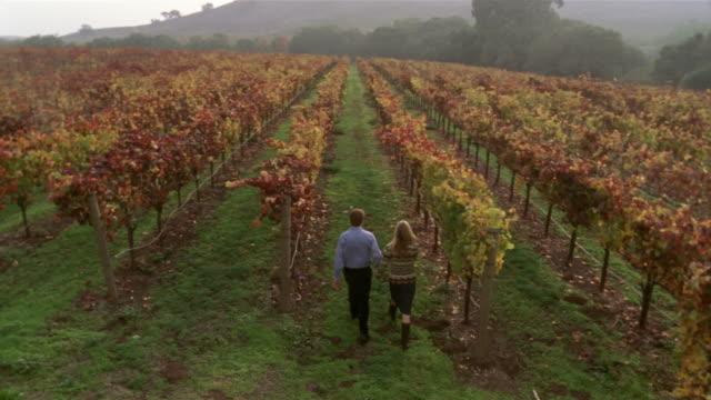 High angle wide shot couple walking in vineyard/ Napa Valley, California