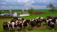 High angle wide shot pan herd of cows grazing on grassy field with farm and silos in background / Iowa
