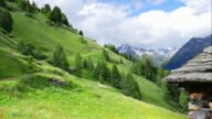T/L High Mountain Pasture On Durreck Group In South Tyrol